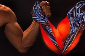 Основные свойства мышц